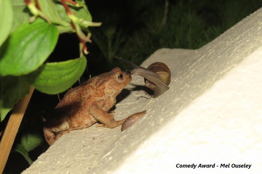 comedy-award-mel-ouseley