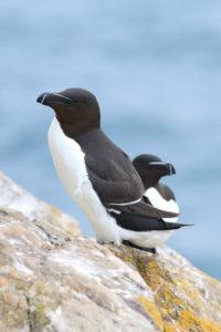 Sea birds (CC Janet Baxter) (2)